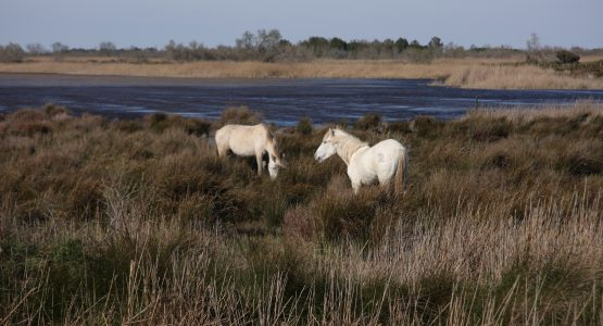L'invention de la camargue